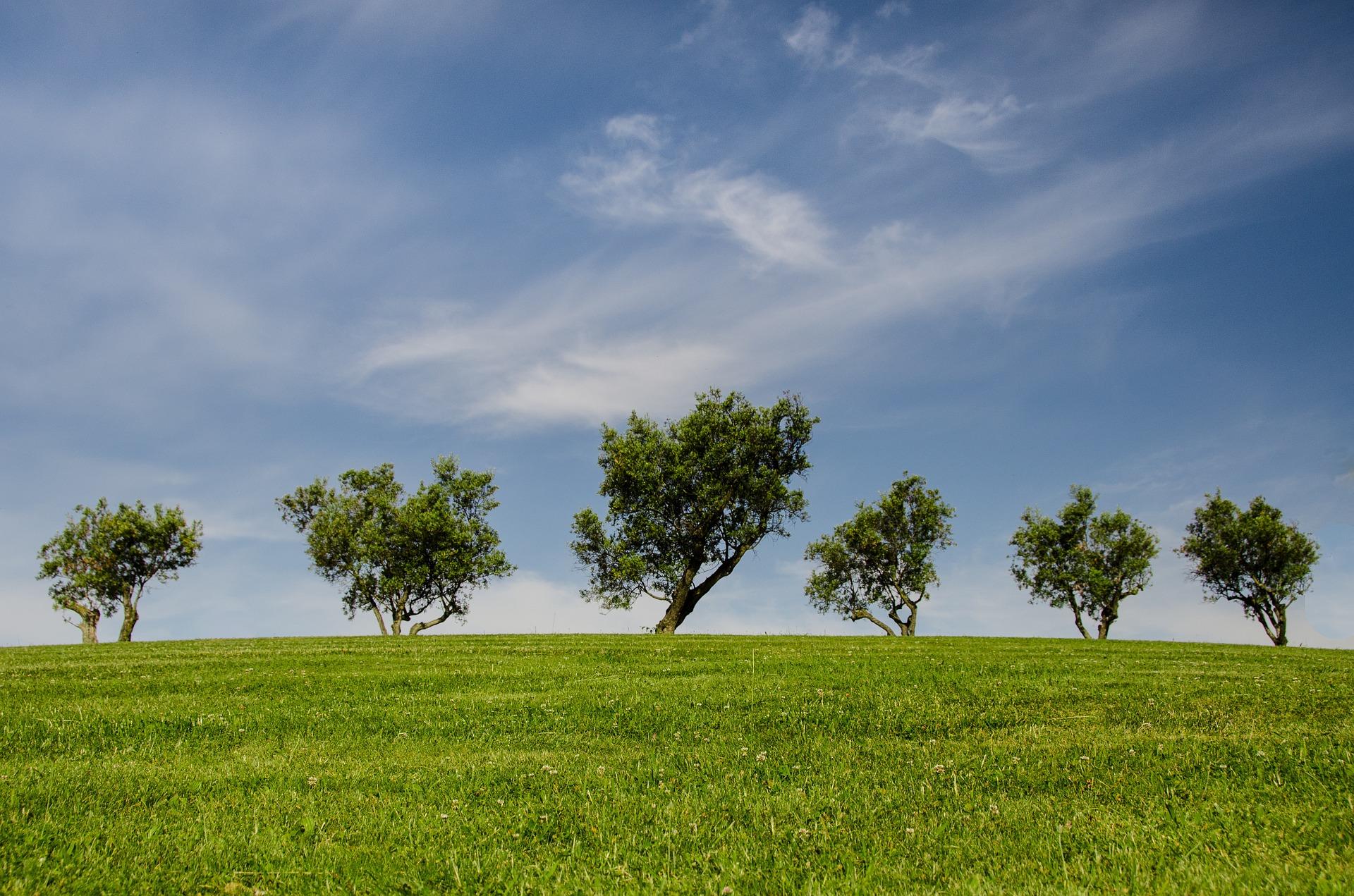 (Tribune) Cristina Storoni : La transition écologique que nous souhaitons en Europe